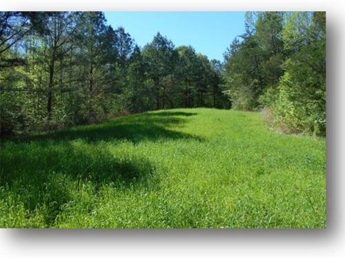 27.06 Acres In Madison County : Canton : Madison County : Mississippi
