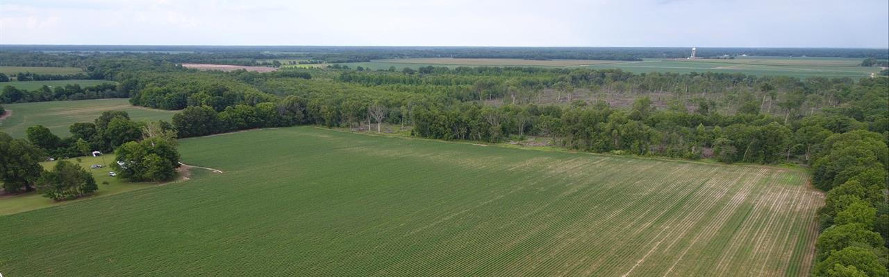 228 Ac, Irrigated Farm Land : Mangham : Richland Parish : Louisiana