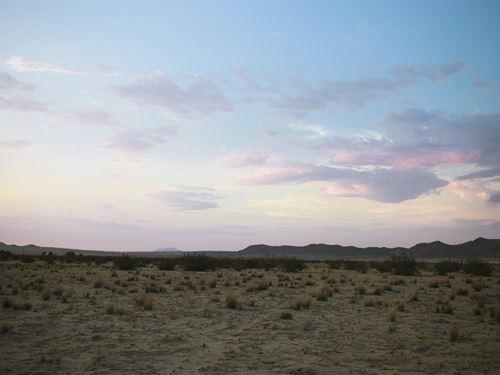 Morning Sunrise In The Desert : Joshua Tree : San Bernardino County : California