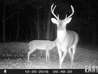 57 Ac +/- Developed Hunting Ground : Lafe : Greene County : Arkansas