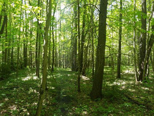 Bethel Road Forest : Steuben : Oneida County : New York