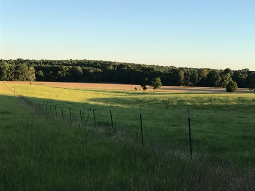 180 Acre Cattle Ranch : Liberty : Amite County : Mississippi