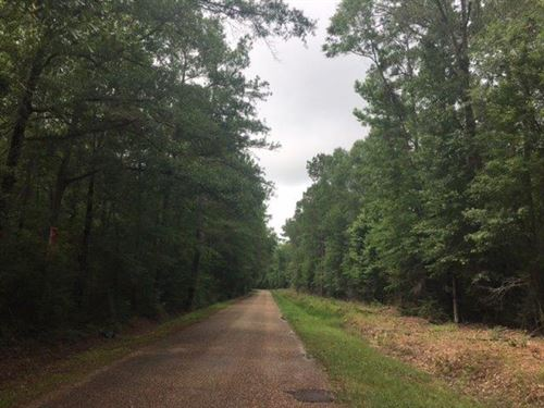 20 Acres Ellis Road : Varnado : Washington Parish : Louisiana