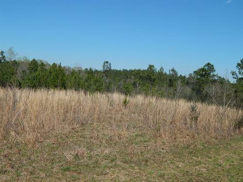 Hammond Road 125718 : Prentiss : Jefferson Davis County : Mississippi