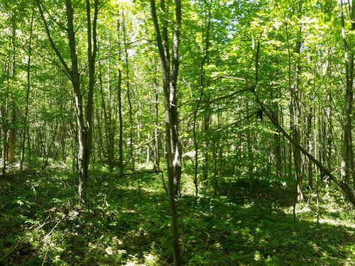 Borders Penn Mountain State Forest : Steuben : Oneida County : New York