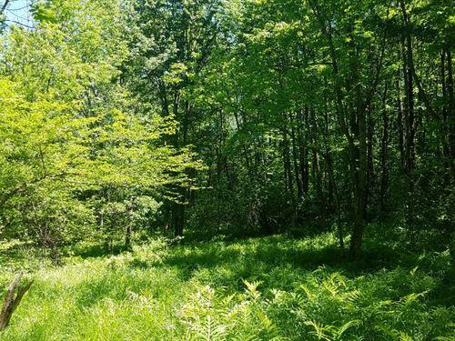 Near Old Forge : Steuben : Oneida County : New York