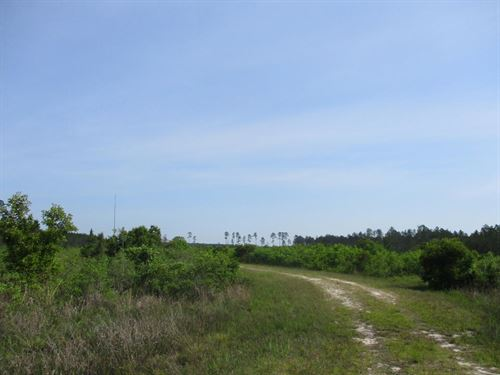 64+ Acres In Western Pierce : Blackshear : Pierce County : Georgia