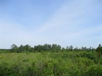 Winky Trail Tract - Hunt, Invest : Blackshear : Pierce County : Georgia