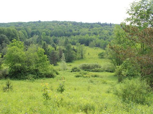 23 Acres Ithaca Ny Borders Forest : Dryden : Tompkins County : New York