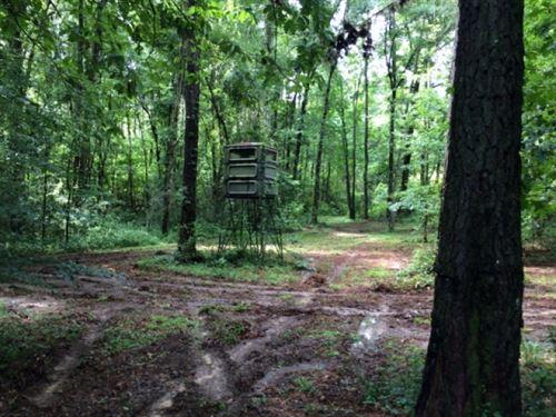 40 And Cabin Amite County, Ms : Magnolia : Amite County : Mississippi