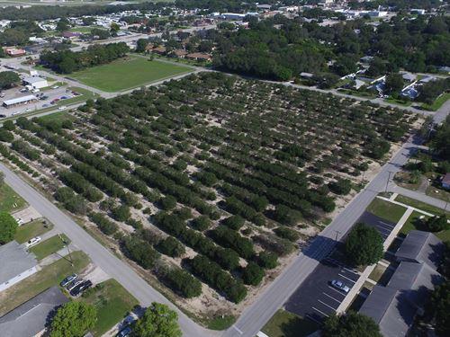 8.39 Acres Of Development Land : Avon Park : Polk County : Florida