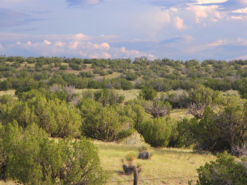 Scenic Az Wilderness Ranch : Saint Johns : Apache County : Arizona