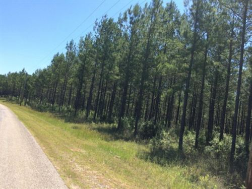 303 Acres +/- For Sale Pearl River : Poplarville : Pearl River County : Mississippi