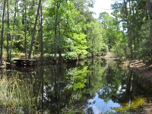 43 Acres 4-M Tree Farm Crockett : Crockett : Houston County : Texas