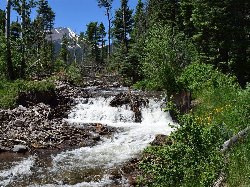 Colorado Creek And Trophy Elk : Westcliffe : Custer County : Colorado