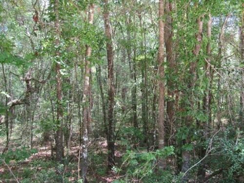 .26 Acres In Live Oak, fl : Live Oak : Suwannee County : Florida