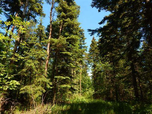 Empire Wooded 24 : Empire : Leelanau County : Michigan