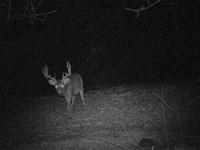 Big Buck Mecca In Southwestern Wi : Viola : Richland County : Wisconsin