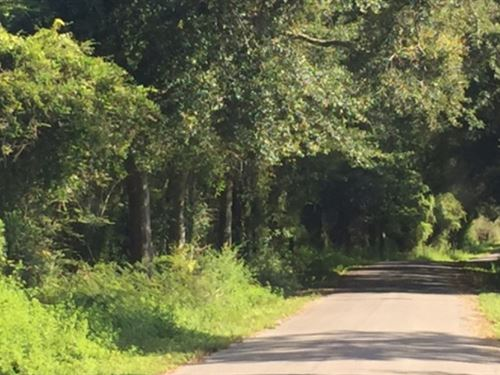40 Acres Home Site For Sale Seminar : Seminary : Jones County : Mississippi