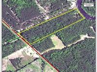 14 Acres On The Edisto River : Smoaks : Colleton County : South Carolina
