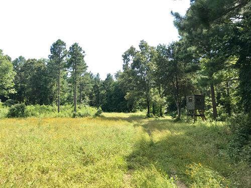 Recreational Timber Tract : Ola : Yell County : Arkansas