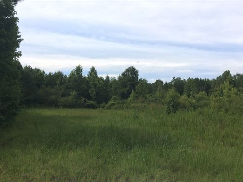 Large Land Tract North Pike : Summit : Pike County : Mississippi