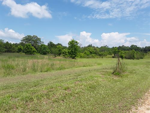 240 Acres With 4 Bedrm Ranch Home : Sardis : Dallas County : Alabama