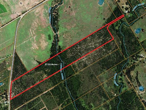Hunting Land Auction Robertson Co. : Calvert : Robertson County : Texas