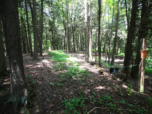 8 Acres Of Quiet, Peaceful Land : Unityville : Lycoming County : Pennsylvania
