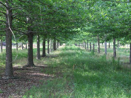 McMillan Tree Farm Tract 1 : Ehrhardt : Bamberg County : South Carolina