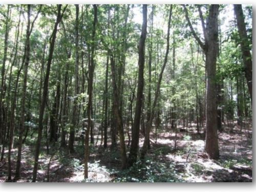 36 Acres In Choctaw County : Fentress : Choctaw County : Mississippi