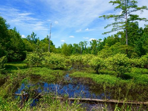 Large Timber & Recreational Opp : Shongaloo : Webster Parish : Louisiana