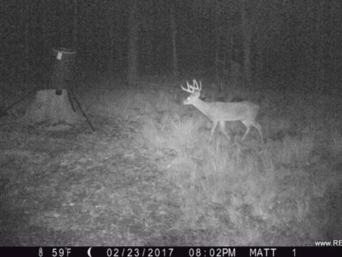 122 Ac - Timberland & Hunting : Chatham : Jackson Parish : Louisiana