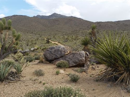 Perfect Place For Camping : Dolan Springs : Mohave County : Arizona