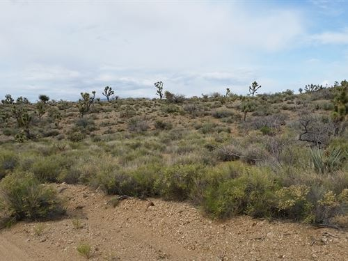 The Best Place To Get Away : Dolan Springs : Mohave County : Arizona
