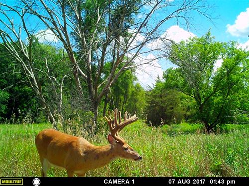 Buildable/Hunting/Tillable Land : Marcellon : Columbia County : Wisconsin