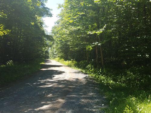 Line Brook Camp Spot : Osceola : New York County : New York