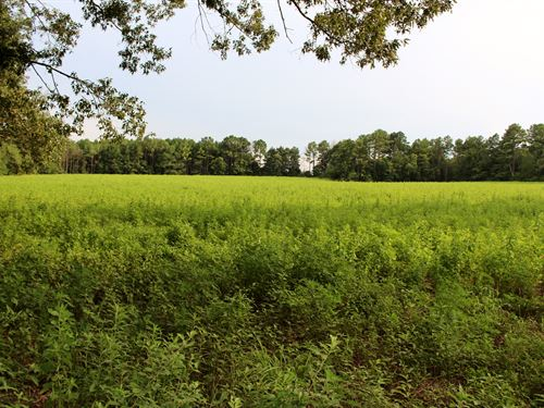 103 Acres In Macon County Ga : Oglethorpe : Macon County : Georgia