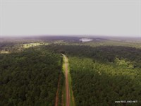 99.8 Ac - Timber For Home Site : Joaquin : Shelby County : Texas