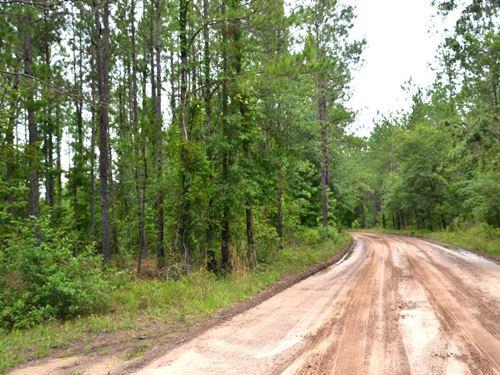 Pinehatchee East Hunting Tract : Mayo : Lafayette County : Florida