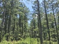 Mallard Road Tract : Gordo : Pickens County : Alabama