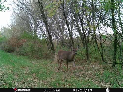 Trophy Whitetail Producing Property : Clyman : Dodge County : Wisconsin