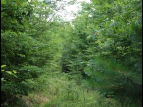 26 Acres In Newton County : Union : Newton County : Mississippi