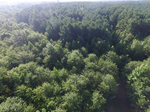 Timber/Hunting Tract : Gilmer : Upshur County : Texas