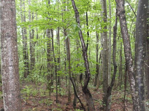 21.5 Ac. In Northern Greenville Co. : Travelers Rest : Greenville County : South Carolina