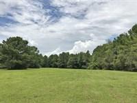 Charles Rushing Road Tract : Ponce De Leon : Walton County : Florida