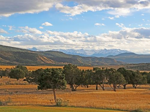 Buckhorn Mountain Ranch : Montrose : Colorado