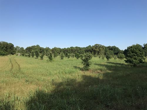 High Fence Farm : Stephens : Oglethorpe County : Georgia