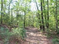 Beautiful Taylor County Tract : Mauk : Taylor County : Georgia