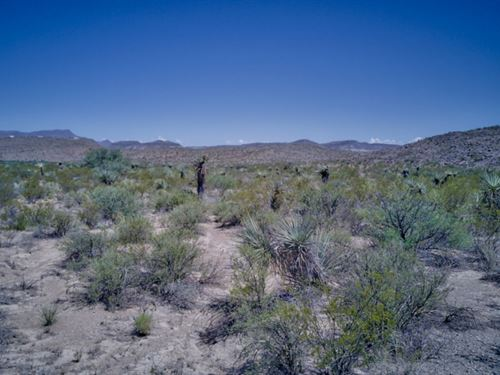 Tract 518 40 Acres Of High Desert : Terlingua : Brewster County : Texas